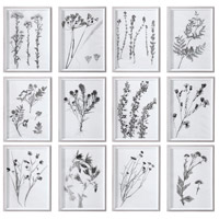 Contemporary Botanicals Art Print