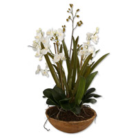 Moth Orchid Planter Artificial Flower or Plant