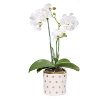 Dot White Faux Botanical