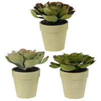 Succulents Green Faux Botanical, Set of 3