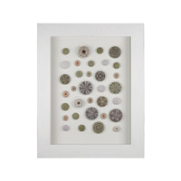 Sea Urchin White and Natural Shell Shadow Box