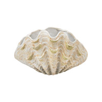 Cretaceous Aged White Clam Shell