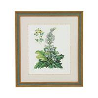 John Richard Botanical/Floral Wall Decor Giclees GBG-0579A