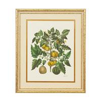 John Richard Botanical/Floral Wall Decor Giclees GBG-0580D