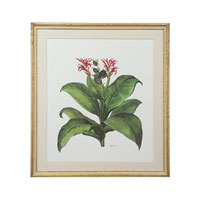 John Richard Botanical/Floral Wall Decor Giclees GBG-0582A