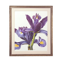 John Richard Botanical/Floral Wall Decor Giclees GBG-0583