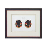 John Richard Animals Wall Decor Giclees in Dark Wood GBG-0590B
