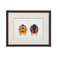 John Richard Animals Wall Decor Giclees in Dark Wood GBG-0590C