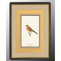 John Richard Animal Wall Art - Print in Black and Gold  GRF-4082D