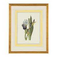 John Richard Botanical/Floral Wall Decor Open Edition Art GRF-5245D