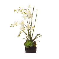 John Richard JRB-2191 Phalaenopsis White Botanical