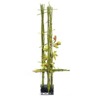 John Richard Fresh Water Look Botanical in Greens JRB-2592W