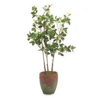 Botanical/Floral Botanical/Floral in Greens  JRB-2750