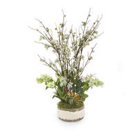Botanical/Floral Botanical/Floral in Whites  JRB-2756
