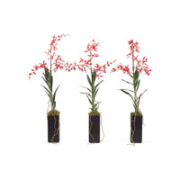 John Richard Florals Botanical in Reds JRB-2797S3