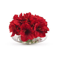 John Richard Fresh Water Look Botanical in Reds JRB-2853W