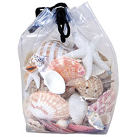 Pomeroy 002366 Shell Natural Decorative Shells photo thumbnail