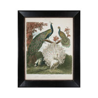 Peacock Gathering 41 X 2 inch Art Print