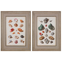 Sterling Set of 2 Muller Shells Framed Art in Washed Wood 151-020/S2