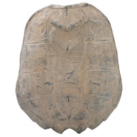 Sterling 2182-019 Cretaceous Ossified Grey Spiny Turtle Shell