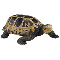 Sterling 2182-030 San Cristobal Natural Decorative Turtle