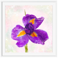 Iris Wall Art, Square, Eternal