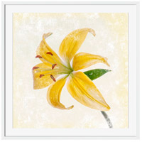 Yellow Lily Wall Art, Square, Eternal