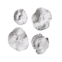 Sea Coral Antique White Wall Art, Sea Coral, Set of 4