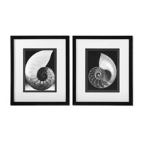 Uttermost Study Of Shells ArtSet of 2 33605