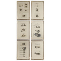 Study Of Shells 19 X 13 inch Shell Prints, Set of 6
