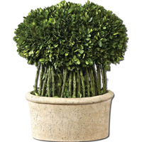 Uttermost Preserved Boxwood Willow Topiary Botanical in Natural Evergreen Foliage 60108 photo thumbnail