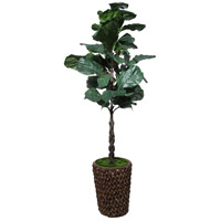 Carica Fiddle Leaf Fig Tree